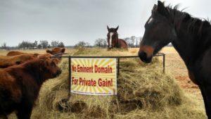 trigg-eminent-domain-cattle