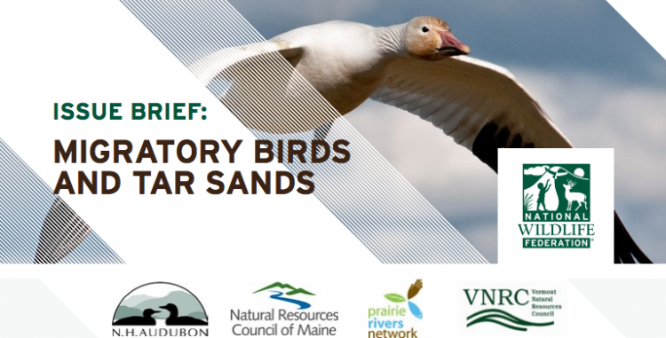 nwf_tarsands_birds