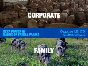 BoldNE_Share-CorporatePigComparison_Graphic