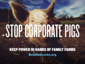 BoldNE_Share-CorporatePigs_Graphic