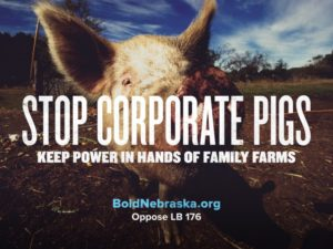 BoldNE_Share with bill number-CorporatePigs_Graphic